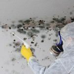 mold remediation, mold removal service, mold removal miami