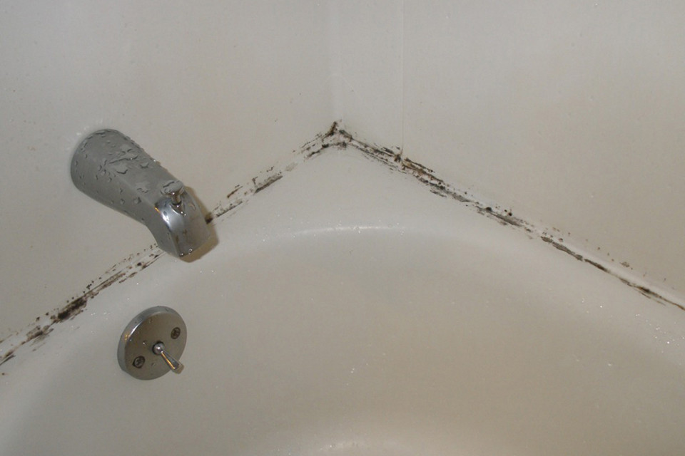 Preventing Mold in My Bathroom