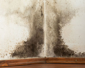 mold removal service, mold remediation